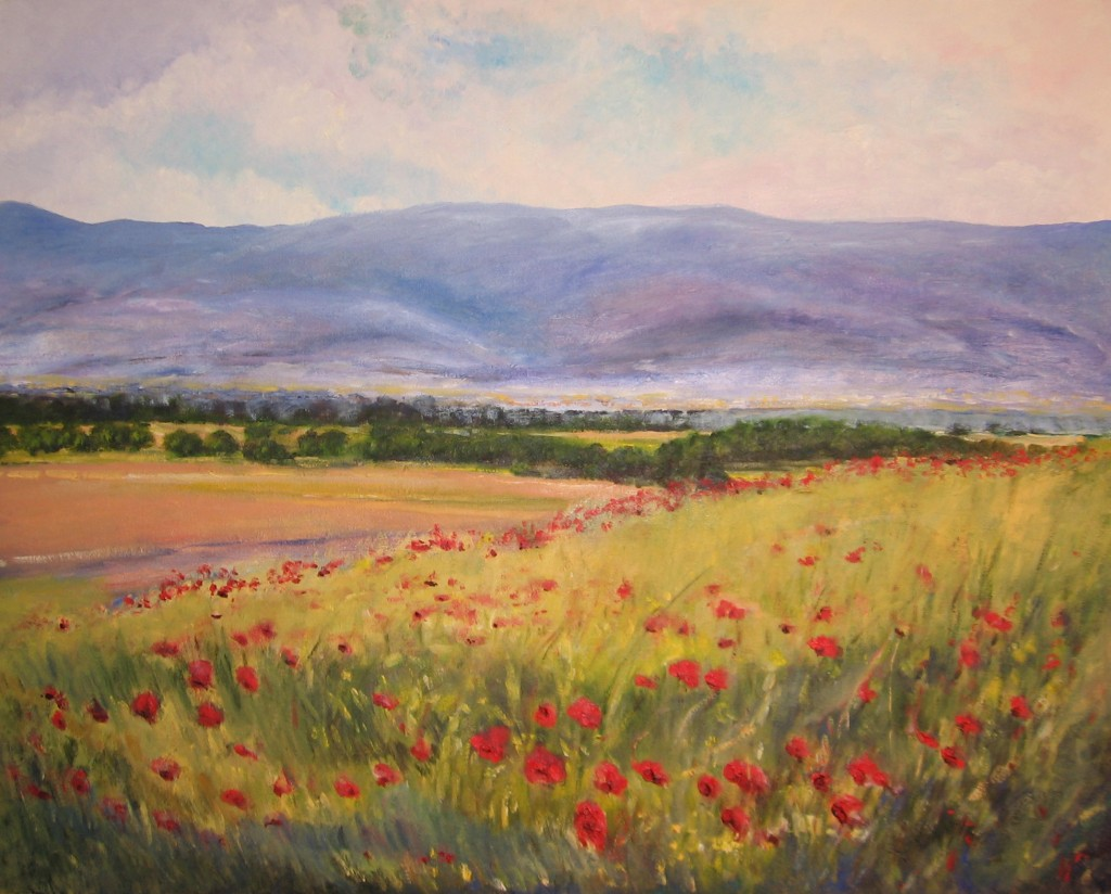 Poppies of Assisi